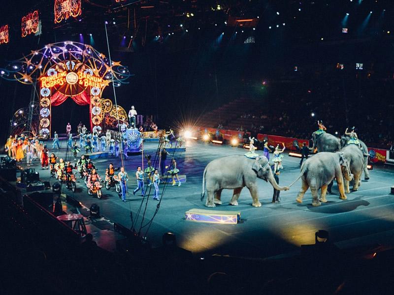 Circus Dans